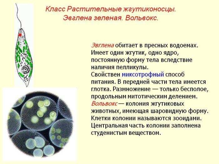 0011-011-klass-rastitelnye-zhgutikonostsy.jpg