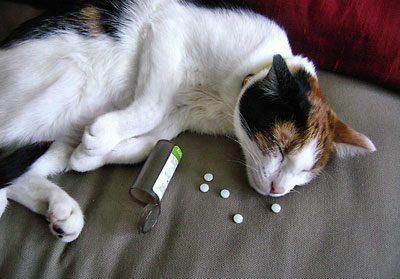 Отравление кошки лекарствами