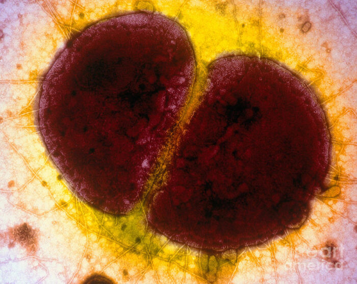 1-neisseria-gonorrhoeae-tem-kwangshin-kim.jpg