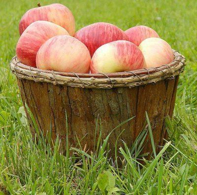 Домашние яблочки