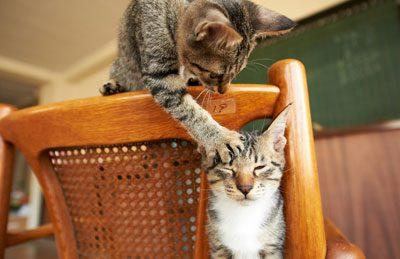 Игра кошек