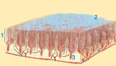 Энтеросгель в кишечнике