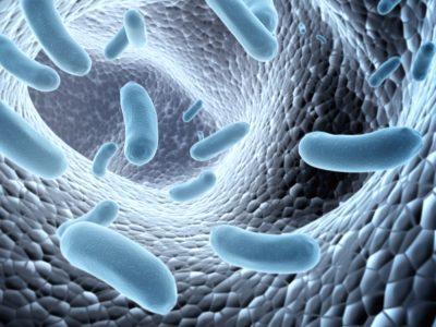 подавлять рост вредных микроорганизмов