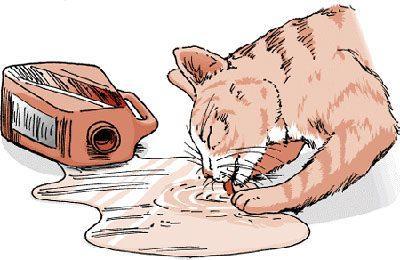 Кот и бытовая химия