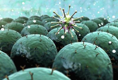 Отличия между энтеровирусом и ротавирусом