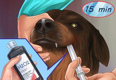 Вызов рвоты у собаки