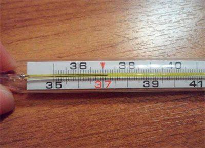 Температура 37 градусов