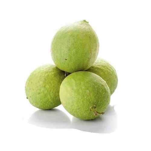 Лечебные свойства чилибухи