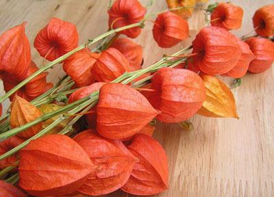 Физалис посадка и уход в открытом грунте: растение оранжевые фонарики