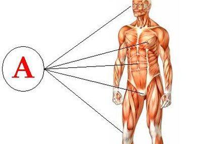 Влияние витамина а на организм