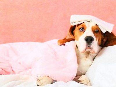 Понос и рвота у собаки