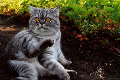 Делаем правильно клизму кошке