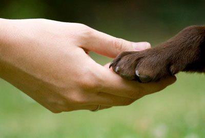 Держать лапу животного