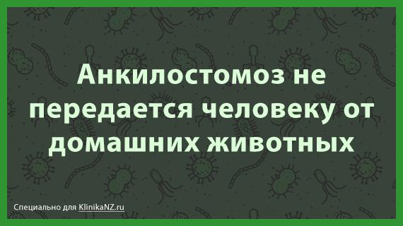 ankilostomoz-u-zhivotnyx-citata-2.png