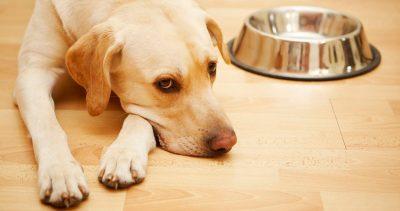 Анорексия у собаки