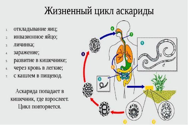 askaridy-u-detej7.jpg