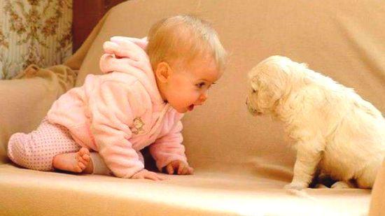 baby-and-domestic-animal.jpg