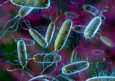 Патогенные микроорганизмы в воздухе