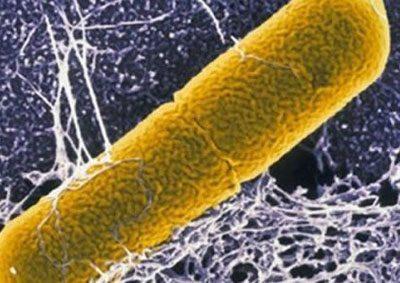 Ботулизм под микроскопом