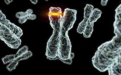 Генетические мутации