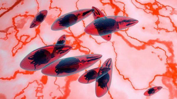 chem-opasen-mikroorganizm-toksoplazma-dlja_2_1.jpeg