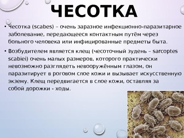 chesotka.jpg