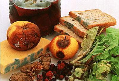 Что такое микотоксины, их содержание в пищевых продуктах