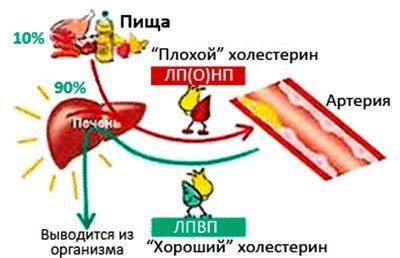 Как пивные дрожжи влияют на потенцию