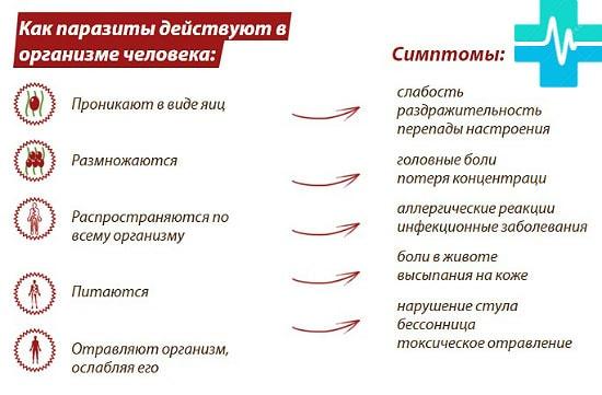 deistvie_i_simptomu_parazitov_gemoparazit_w121-min.jpg