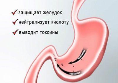 Воздействие фосфалюгеля на желудок