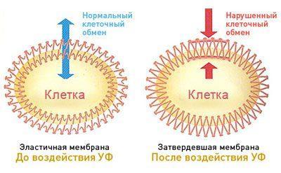 Влияние солнечного излучения на клетку кожи