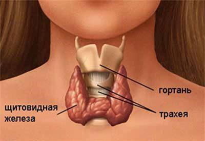 Щитовидная железа при гипотериозе