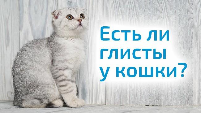 glisti-u-koshek-1.jpg