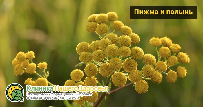 glistogonnye-sredstva-dlya-profilaktiki-9.png