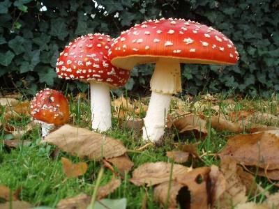 Первые признаки отравления грибами