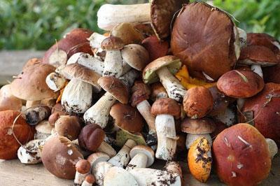 По каким признакам отличить грибы: определяем съедобные и несъедобные