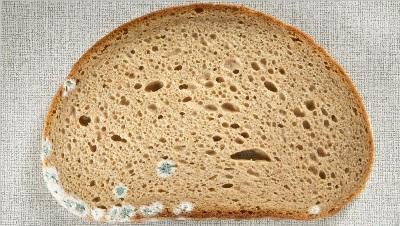 Можно ли есть хлеб с плесенью