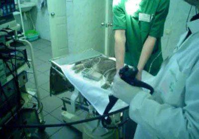 Промывание коту желудка