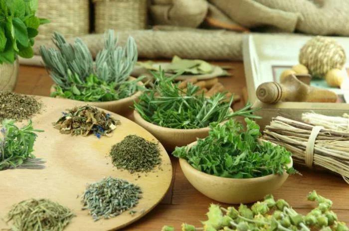 Лекарственные травы, очищающие кишечник