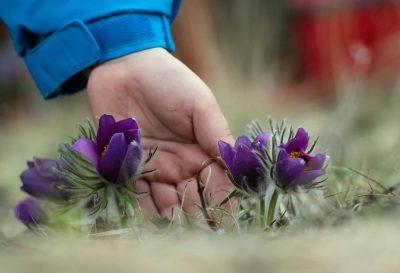 Дети собирают цветы