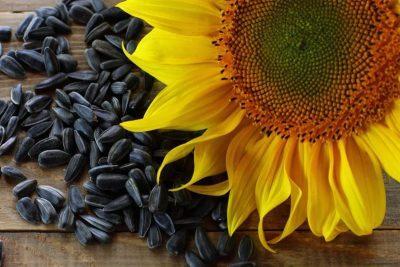 Состав семян подсолнуха