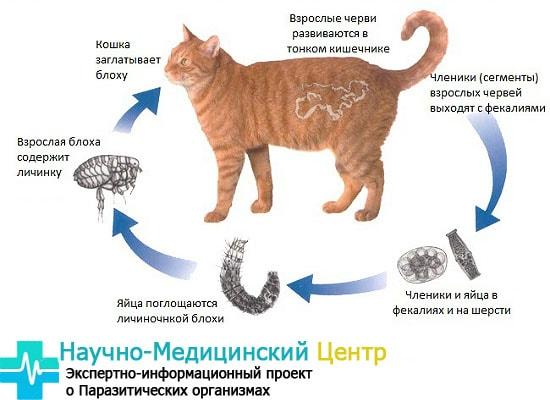 invasii_y_juvotnuh_gemoparazit_w332-min.jpg