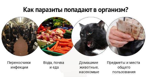 kak-parazity-popadayut-v-organizm.jpg