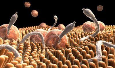 Очистка организма от паразитов