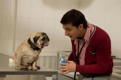 Клизма собаке – показания к процедуре и как сделать дома