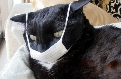 Гастроэнтерит у кошек, вызванный коронавирусом – симптомы, лечение, профилактика