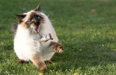 Кошка отравилась крысиным ядом - что предпринять