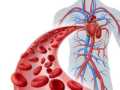 Наладить кровообращение