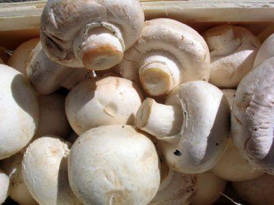 Культивированные грибы