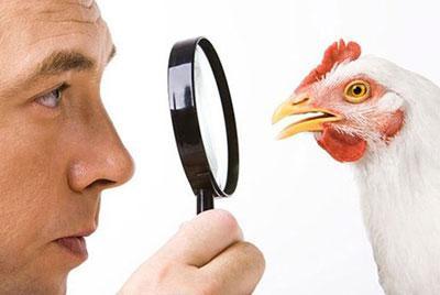 Симптомы отравления протухшей курицей